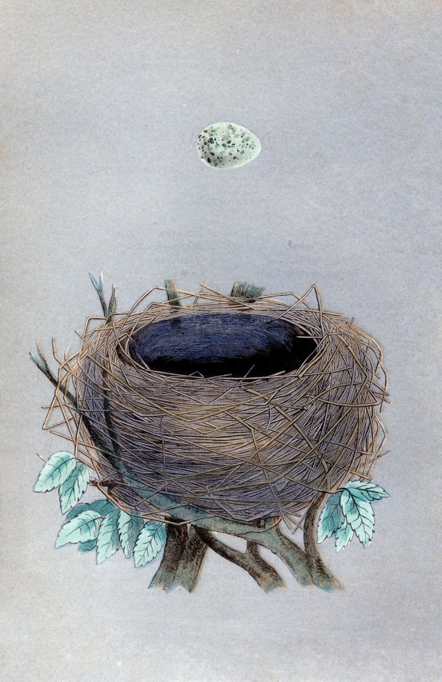 morris nest vintage image graphicsfairy006sm